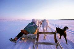 Reindeer travelling